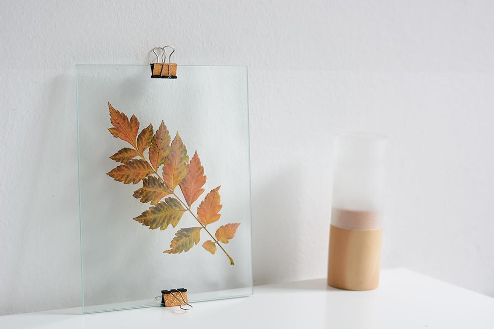 getrocknetes Blatt auf Glasplatte
