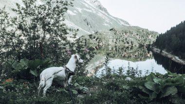 teaser_reisen mit hund