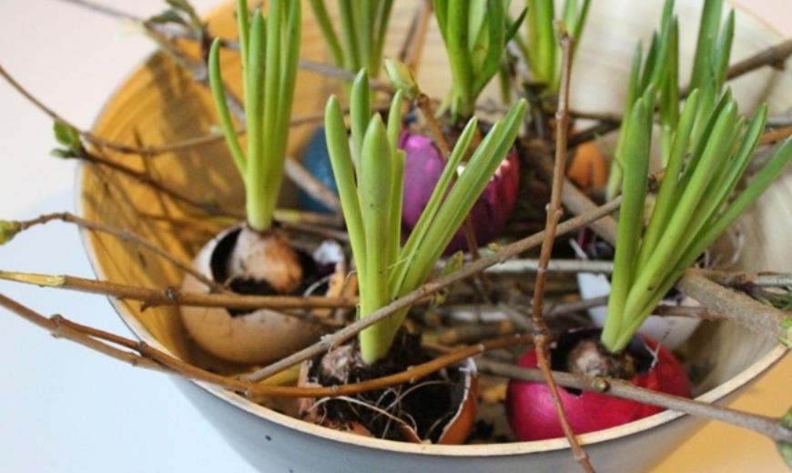 Blumenzwiebel in Eierschalen